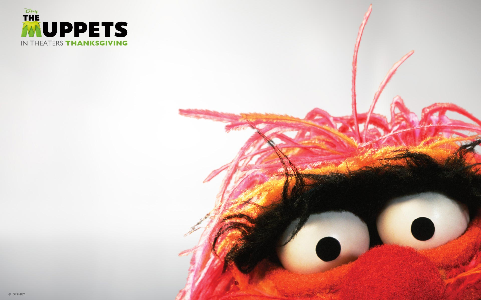 The Muppets Wallpapers